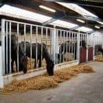 Løsdrift hestestald